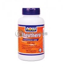 Eleuthero - 500 mg. / 100 Caps.